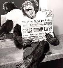 فیگور شامپانزه