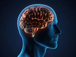 فواید یادگیری چند زبان در سلامت مغز!