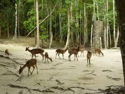 پارک آهوان جاذبه ای بی نظیر در جزیره کیش