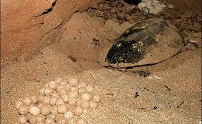 از تماشای دیدنیهای جزیره لاکپشتها در کیش لذت ببرید