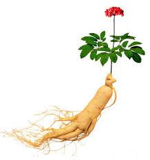 گیاه جنسینگ چگونه بر هورمونهای بدن تاثیر میگذارد